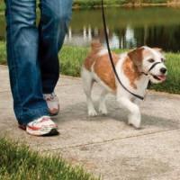PetSafe Easy Walk Nosgrimma (L)