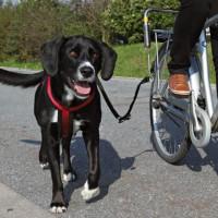Trixie Biker-Set Big Dog för cykel (Mångfärgad)